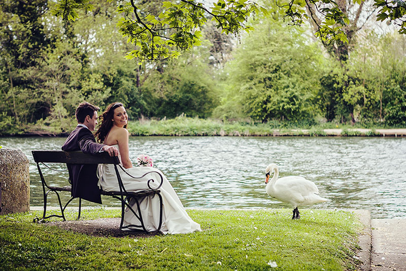Bride and Groom on the Banks of Duck Pond with Swan